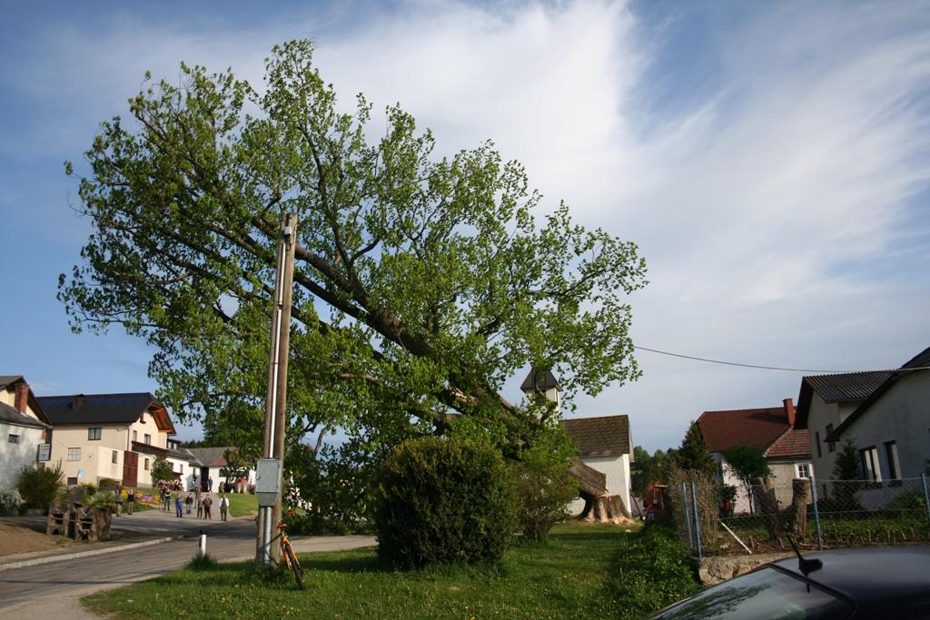 Baum fällt!